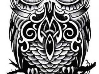 maori-baykus-dovme-modeli